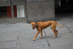 Front (mdghty) Tags: street nyc dog manhattan fetch seaport
