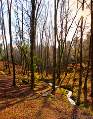 autumn carpet  (1 de 1) (gulfman1) Tags: autumn light shadow brown sun color tree green fall portugal nature water forest landscape leaf exposure smooth