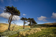 Trio! (Suddhajit) Tags: uk winter tree canon landscape isleofman 1740l snaefell eos5d suddhajit pursuitoflight