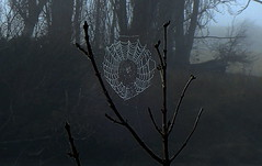 SPIDER WEB up close (Lani Elliott) Tags: nature naturephotography lanielliott web spiderweb trees upclose close closeup bokeh grey bleak drab fog foggy mist misty mood moody macro macrounlimited wow incredible beautiful gorgeous