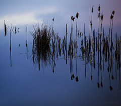 Colours of Cors Caron (shawn›raisin d+p) Tags: bog canon6d corscaron cymru shawnwhite uk wales westwales blue calm cattails colours gentle idyllic peaceful pond reeds reflection reflective restful serene serenity solitude telephoto tranquil water wetland tregaron unitedkingdom gb