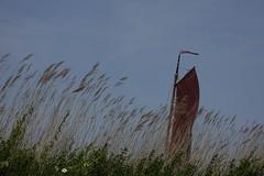 Vlaardinger Vaart (Gerard Stolk (vers l'Assomption de la Vierge)) Tags: middendelfland zomer vlaardingervaart zeilschip zeil riet