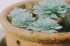 (lemeure) Tags: suculent plant photography