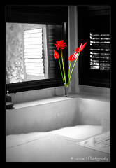 Home is where your heart is... ( Janine ) Tags: flowers red vacation canon cutout thailand bathroom eos hotel january resort kohsamui samui bathtub accommodation kosamui bophut 2010 suratthani colorkey 450d hideawayvilla sixsenseshideaway sixsenseshideawaysamui asalaproperty