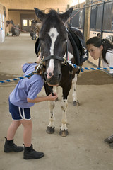 Baba (Montgomery Area Nontraditional Equestrians (MANE)) Tags: al mane pikeroad