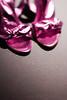(ion-bogdan dumitrescu) Tags: pink shoes purple fuchsia bitzi ibdp mg3953 ibdpro wwwibdpro ionbogdandumitrescuphotography