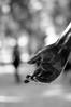 just give me your hand... (...storrao...) Tags: blackandwhite bw sculpture portugal statue nikon hand bokeh lisboa escultura jardim photowalk mão estátua lx d90 sooc storrao sofiatorrão nikond90bw worldwidephotowalk2010 wwpw2010 3rdworldwidephotowalk spedroalcântaragarden spedroalcântara