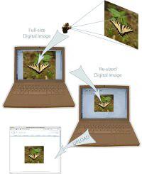 locljivost spletne strani - testiranje resolucije
