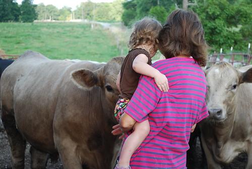 Petting the bull ..