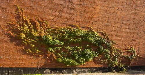 KTH wall plant