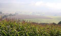 (:Linda:) Tags: mist field germany landscape corn village grain thuringia mais maize americangrain brattendorf