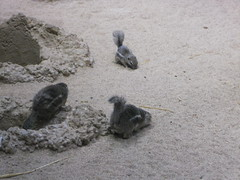 Crazy Squirrels (Bibi) Tags: voyage park trip travel parque cute animals zoo squirrel europa europe sweden stockholm viagem zoolgico skansen animais esquilo sucia estocolmo 2010 fofinho stockolm bonitinho