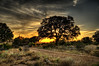 Johnson City Sunset Tree (mapaolini) Tags: road sunset tree flag final hdr johnsoncity