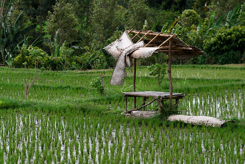 In the middle of a rice field in Bali. / Nisa + Ulli Maier