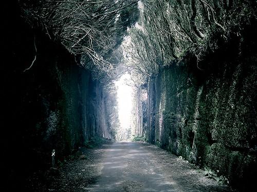 Enter to neverland