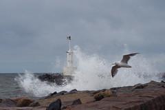 The pier at Glommen (atranswe) Tags: sea sky pier adult sweden gull himmel sverige splash hav pir halland ms plask kattegatt vuxen glommen dsc5704 theperfectphotographer atranswe absolutelystunningscapes 56530n12300e