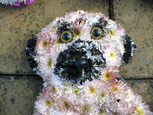 Meerkat floral tribute
