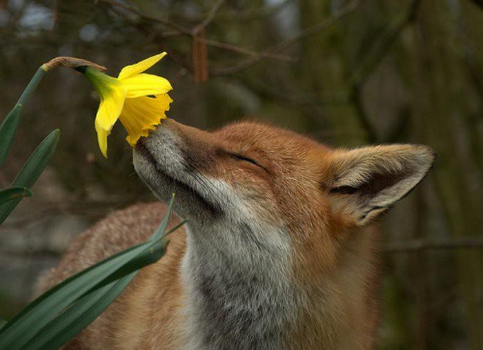 Для настроения: мммм..какой аромат!