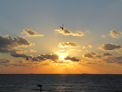 Sunrise with the seagulls (Donald Windley) Tags: sea orange bird beach clouds sunrise perfectsunrise