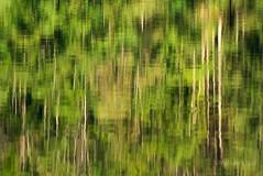 Obersee Reflections - Bavaria (1_0080) (Malcolm Bull) Tags: lake reflection germany bayern deutschland bavaria berchtesgaden include obersee knigssee kingslake 20100906bavaria10080edited1web