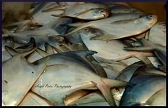 #148 The Pomfret Fish (avipatra {Busy}) Tags: india fish bengal bengali westbengal avijit pomfret incrediblebengal avipatra avijitpatra