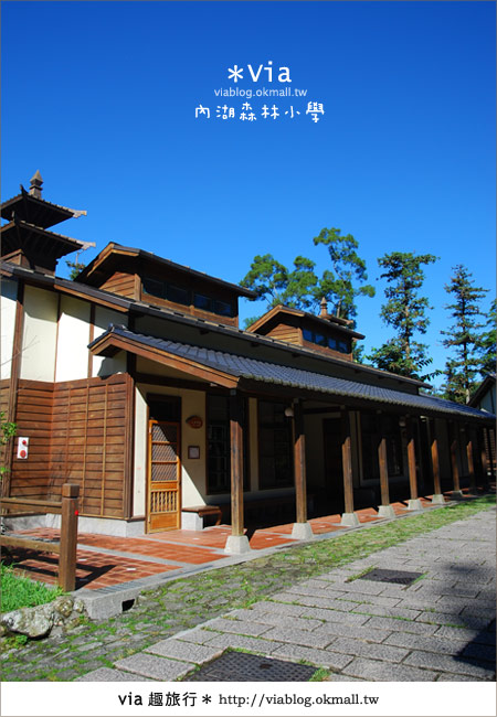 【溪頭一日遊】森林中的夢幻校園~內湖森林小學7