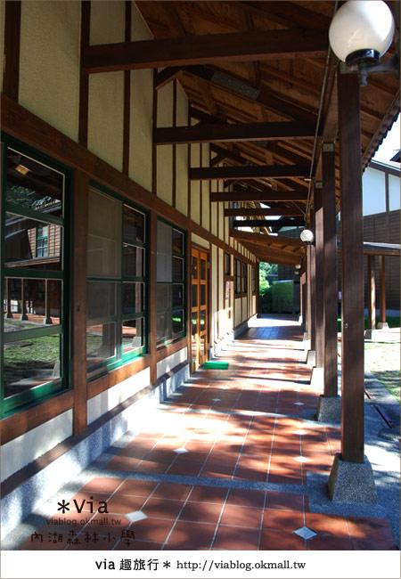【溪頭一日遊】森林中的夢幻校園~內湖森林小學18