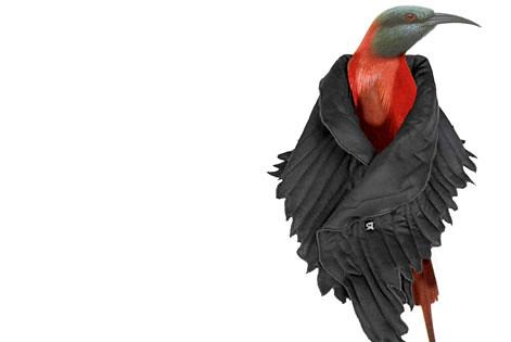 BIRDMAN BIRD CHRISTOPHE COPPENS DROOG