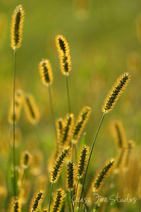 09-20-grasses