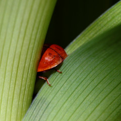 I'm Gone ... (AnyMotion) Tags: macro animals bug garden insect square tiere spring frankfurt wildlife ladybug makro insekt garten 2010 kfer marienkfer makroaufnahmen anymotion 800x800 canoneos5dmarkii 5d2