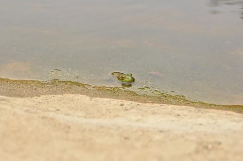Froggie hiding