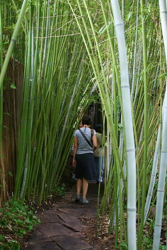japanese garden bamboo grove
