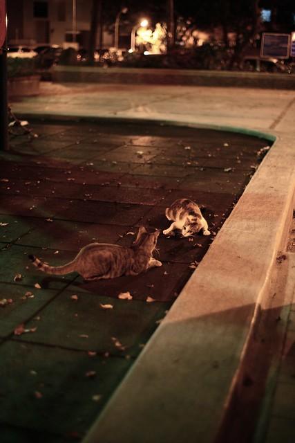 [街拍]夜街貓