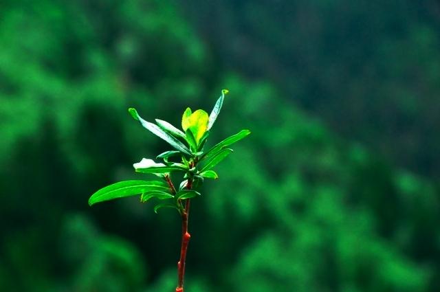 Jiuzhaigou flower19