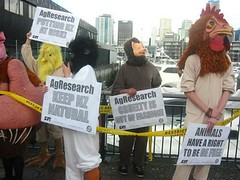 GMO in cows Dec 09 protest Auckland NZ (mikescottnz-away for a momth) Tags: december2009 gentechnikfrei sansogmgmofreeworld animalcrueltyisoutoffashion agresearchprotest gefreeanimals puttingnzatrisk agresearchmadness crueltyisoutoffashion safefoodsafetyandjustice
