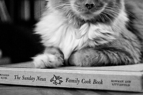 The Sunday News Family Cookbook