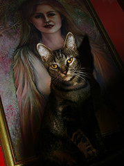 I Put a Spell on You (faith goble) Tags: shadow art cat painting scary october artist poem photographer menacing kentucky ky evil cc creativecommons poet writer bowlinggreen pest hallween glowingeyes bossy hypnotize mesmerize screaminjayhawkins faithgoble gographix faithgobleart