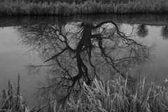Willow Reflection (Avard Woolaver) Tags: light blackandwhite bw reflection tree monochrome landscape photography spring pond flickr noiretblanc willow canondslr digitalimage sociallandscape artcommerce photovogue avardwoolaver avardwoolaverphoto