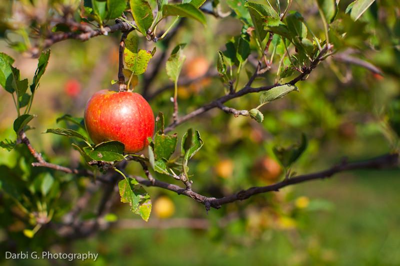 DarbiGPhotography-Weston Red Barn Farm-102