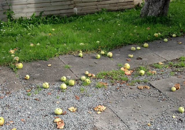 jablecznik