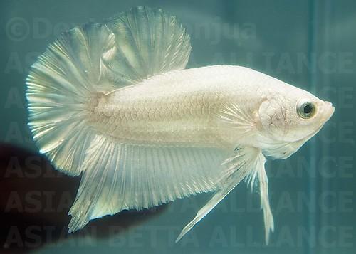Photo Gallery - carolinesfish
