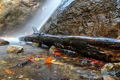 Base of Pfeiffer Falls (J-Fish) Tags: california park nature waterfall log bigsur redwood pfeifferfalls pfeifferbigsur bigleafmaple pfeifferbigsurstatepark pfeifferpark d300s 1685mmf3556gvr 1685mmvr
