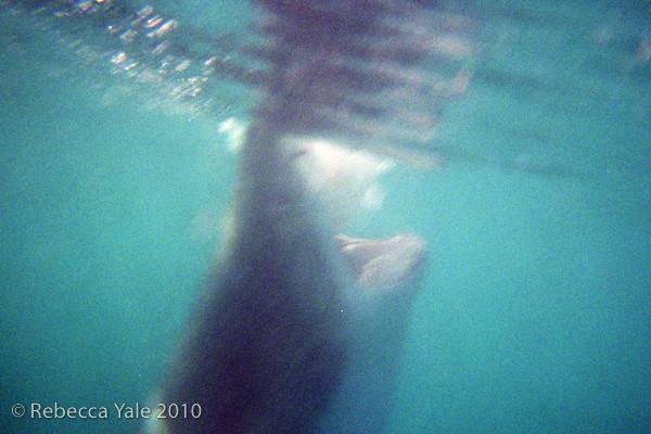 RYALE_Great_White_Shark_Diving-3