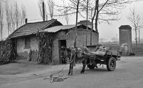 茅草屋和驴车