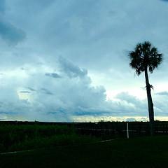 The Weather Around Here (tropicalart77 (Tammy Dial Gray)) Tags: cloud tree rain weather florida palm prairie paynes