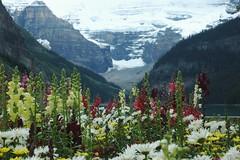 Lake Louise, Alberta Canada (Peace Lvr) Tags: flowers lake canada glacier louise alberta