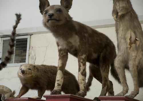 Mammal Division IX