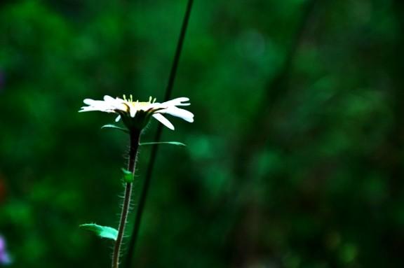 Jiuzhaigou flower10