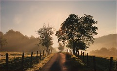 ~~Petit matin magique~~ (Jolisa) Tags: trees light nature sunrise landscape nikon arboles camino path lumire ombre arbres ruelle paysage sentier chemin rayons matin leverdesoleil nikonflickraward croquenature flickrarward