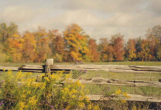 Autumn Fence 274/365